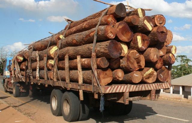 saque de madeira  (1) Estacio Valoi 2013