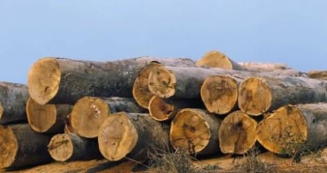 loggingreuters