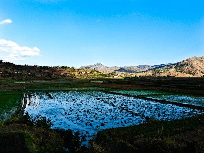 Rice-Fields-in-Madagascar