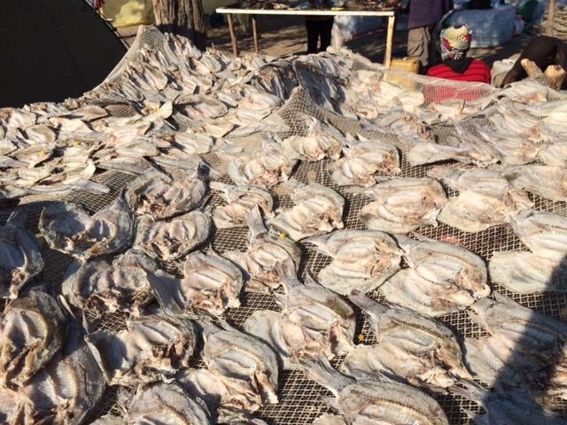 Botswana: Pirates threaten fishing industry